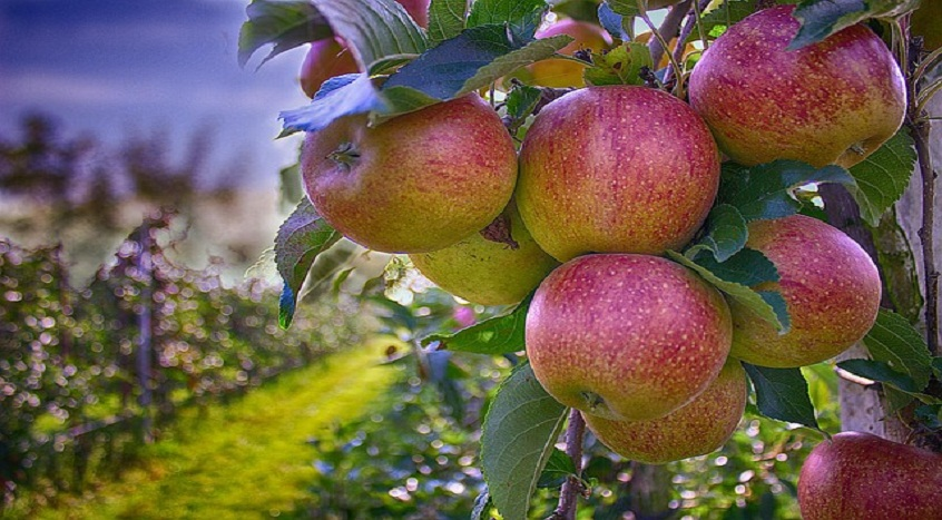 #18 Drzewka owocowe biznes