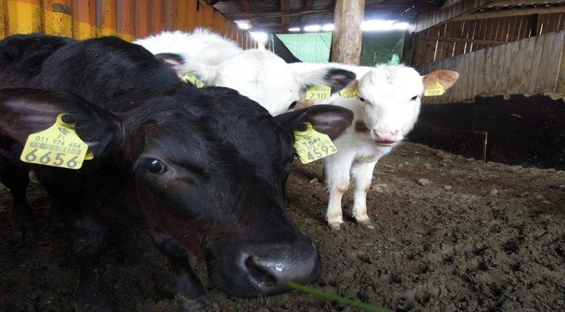 #44 Pomysł na biznes -nowoczesne gospodarstwo rolne